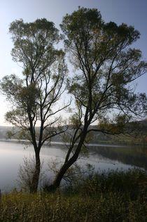 Weiden am See by rheo