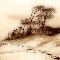 Windflüchter by fotodehro