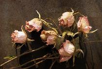 Welke Rosen by pahit