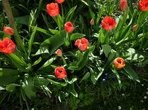 Frühlingsgrüße by Eva Hedbabny