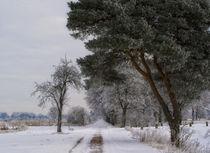 Wintertraum III von martinbs