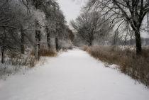 Wintertraum I von martinbs