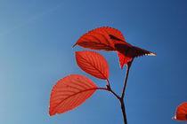 Herbstgruß von rubyred