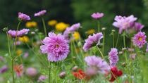 Sommer im Garten von waidlafoto