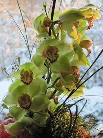 Orchidee in der Morgensonne von Marie Schmetz
