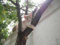 Katzenkind auf Klettertour