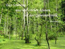 Geheimnisvolles Moor by Sonja R. Klein