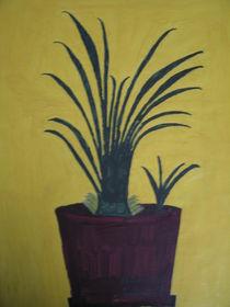 Zimmerpflanze von Harald Schmitt
