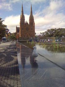 Stadtleben Sydney by alinekuhaupt