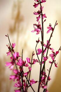 Frühlingsgruß by lucie