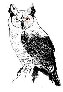Owl by Horatio Fandango