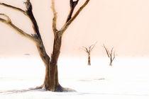 Wüstenlicht von Jürgen Klust