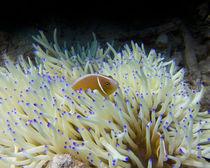 Nemo by qarts