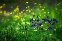 Blumenwiese von Ralph Bridges
