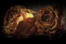 'Rosen' von Elke Balzen