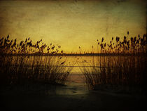 Lake in winter by Evita Knospina