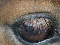 Spiegelung im Pferdeauge von malitia