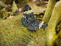 Schmetterling auf einem Stein von malitia