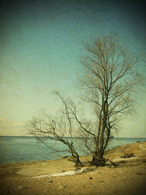 Sea in spring by Evita Knospina