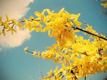 Spring by Evita Knospina