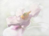Anemonenduo by Franziska Rullert