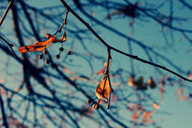 Blue autumn by Evita Knospina
