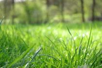 Sleeping in the grass von Katharina Weigl
