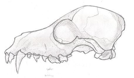 Anime-skull
