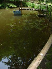Wasserspiegelung von pimlico