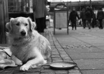 Was gibt es zu essen?- Straßenhund
