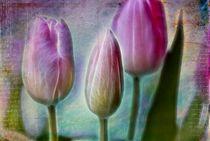 tulips von Regina Hauke