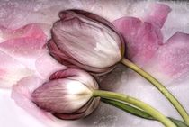Blütenträume von Regina Hauke