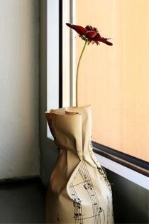 Sehnsucht einer Schokoladenblume by blickpunkte