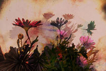 Schattenblume2