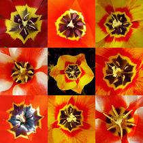 Tulpenkaleidoskop von pahit