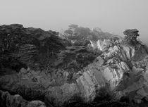 Point Lobos #7 by Ken Dvorak