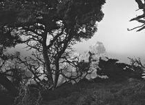Point Lobos #8 by Ken Dvorak