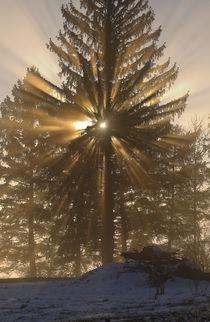 Last rays of the sun by Florian Barras