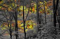 Falling Leaves by Len Bage