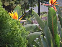Little bird, Giant soul by Laura Medina Rascón
