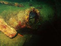 congerfish von Altug TEZER
