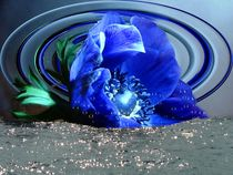 Blaue Anemone von Elke Balzen