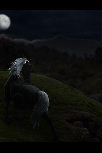 Horse by Kuba Skorkowski