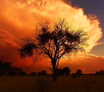 african skies by james smit