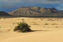 Fuerteventura, Dünenlandschaft mit Vulkanbergen bei Corralejo by Frank Rother