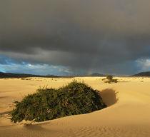 Fuerteventura, Dünenlandschaft mit Gewitterwolke by Frank Rother