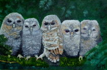 Young owls by Wendy Mitchell
