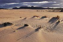 Fuerteventura, Dünenlandschaft bei Corralejo von Almut Rother