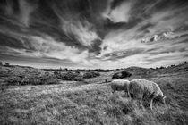 Heather Hills 1 by Stefan Nielsen