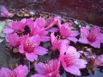Tiny-flowers-4